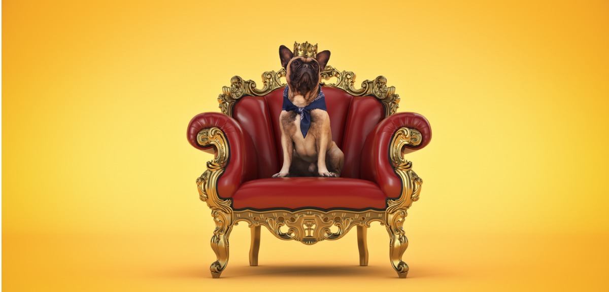 Dog, named Content, is sitting in a thrown with a crown.
